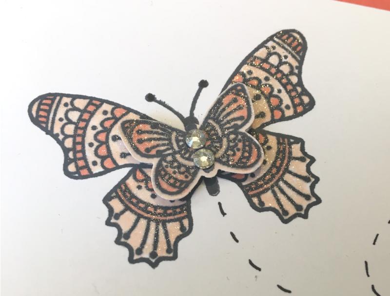 Zbutterfly close up